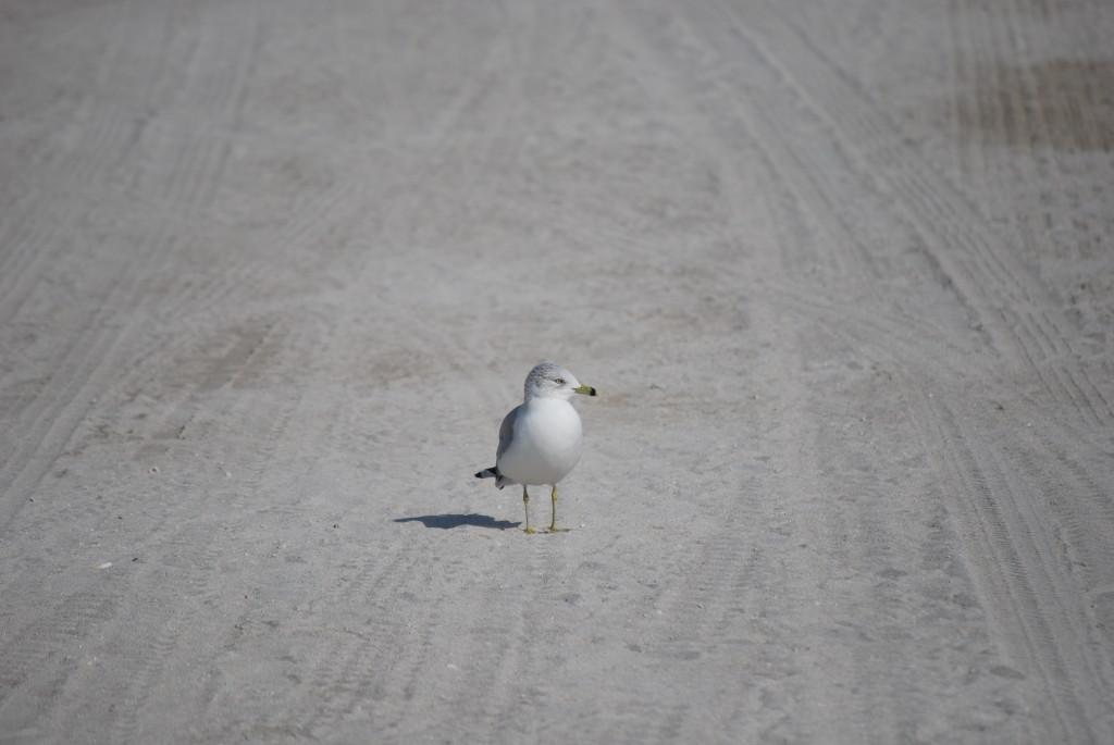 Miami Beach - il Pellicano