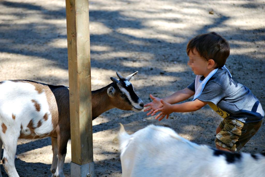 Parco Naturale di Cervia - capretta e bambino nella Fattoria Didattica