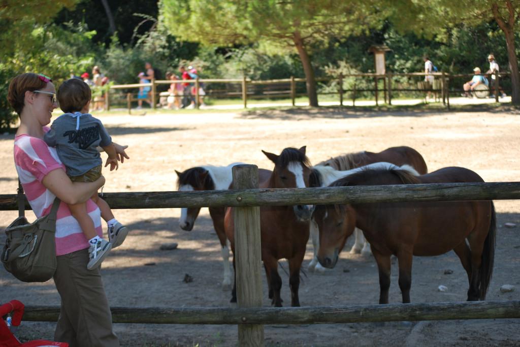 Parco Naturale di Cervia - Cavalli