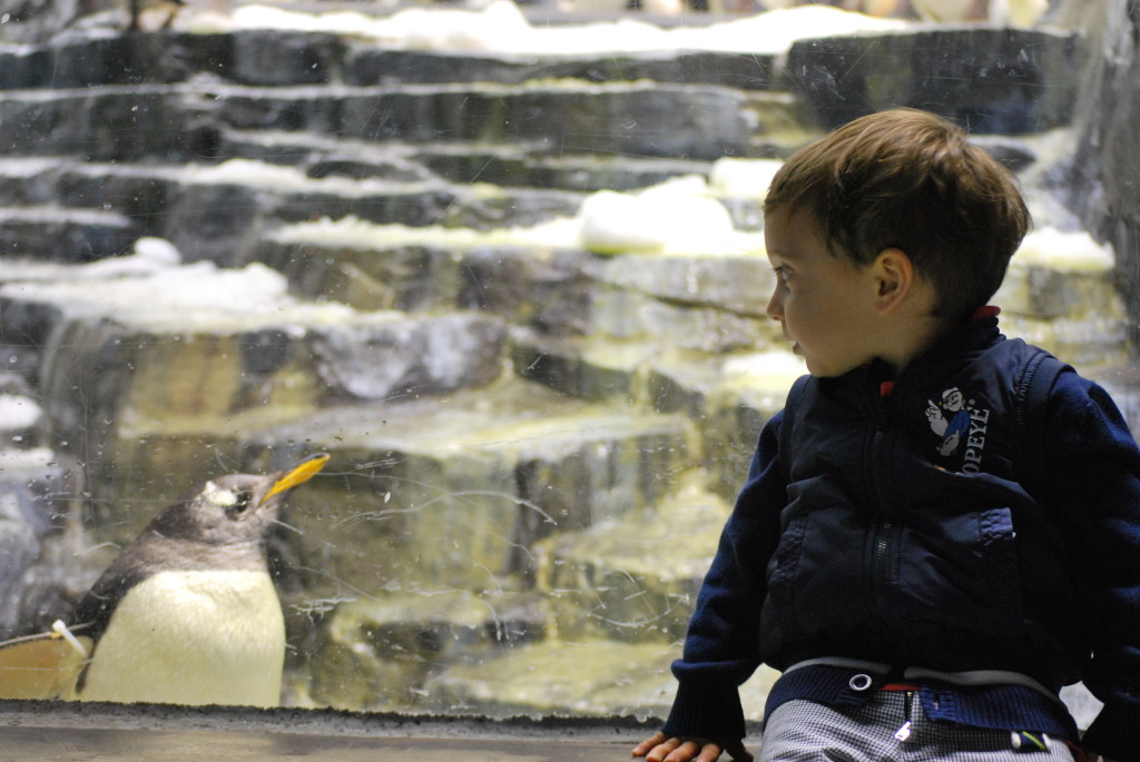Seaworld - Orlando - The baby and the Penguin
