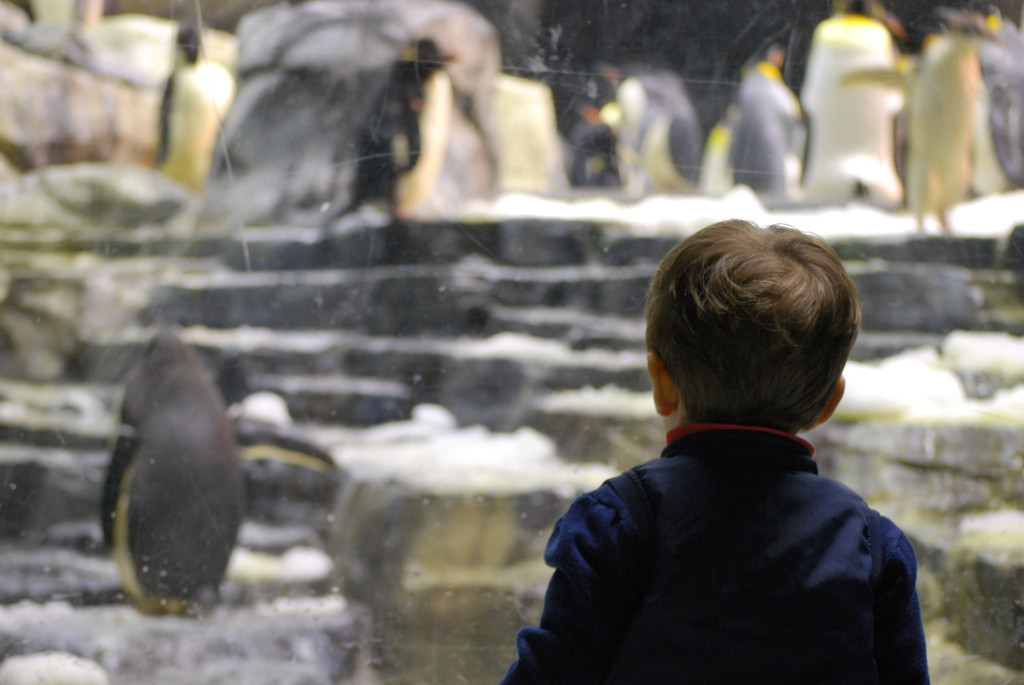Seaworld - Orlando - The baby and the Penguin 2