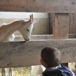 Bambini a lezione degli animali: di memorie canine e visite al maso