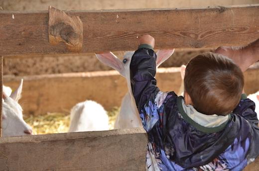 Bimbi e animali - capre