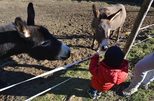 Amici dell'asino - asini e bambini
