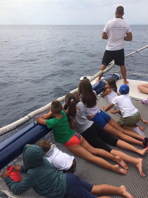 Vedere i delfini a Taranto